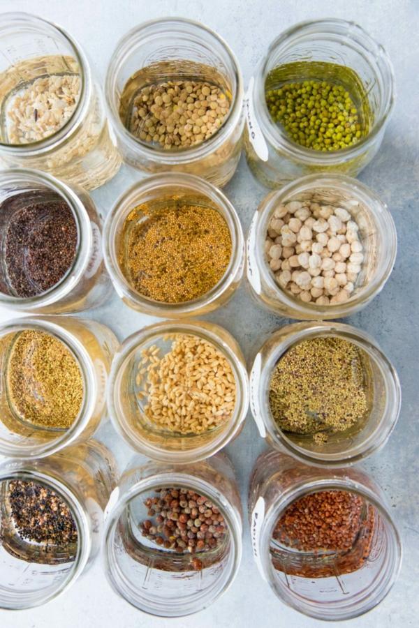 germination diy graines germées