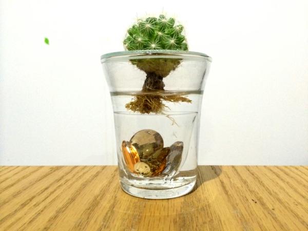 idée activité manuelle déco diy plante aquatique