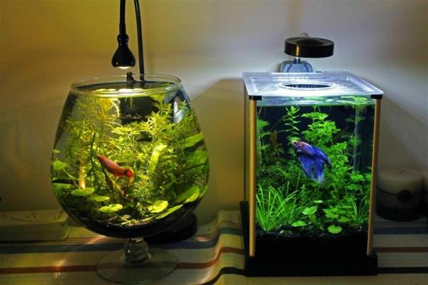 idée déco aquarium plante aquatique