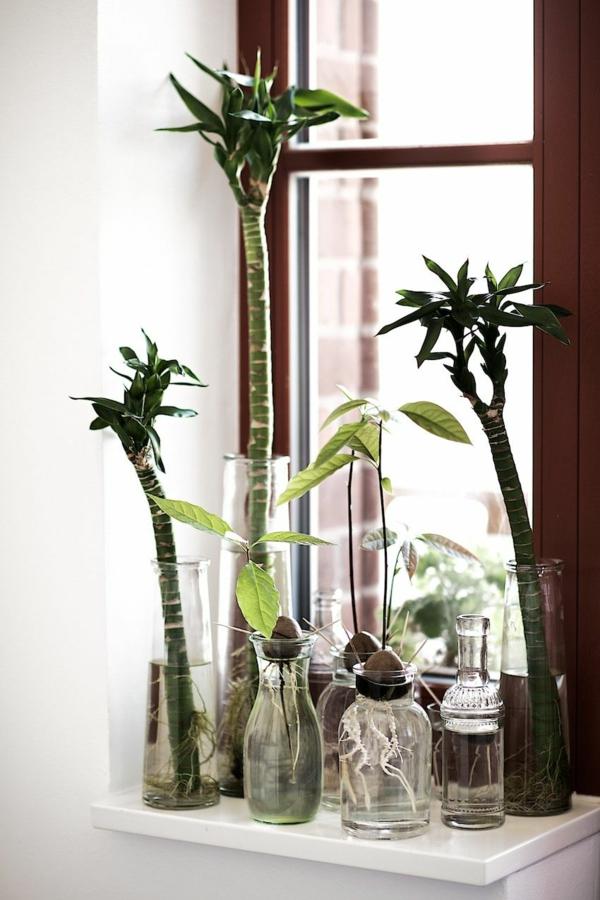 idée déco fenêtre plante aquatique