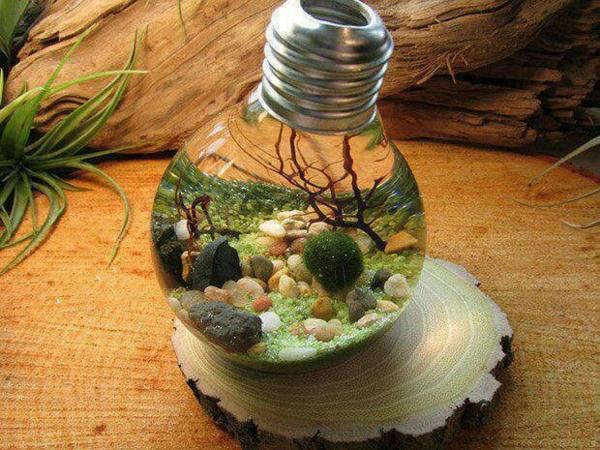 idée déco plante aquatique ampoule électrique