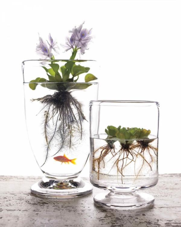 idée déco plante aquatique en vase