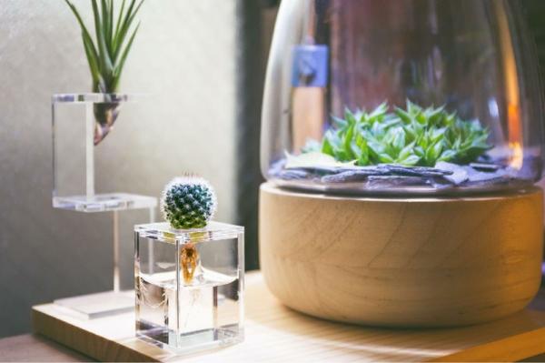 idée déco récipient plante aquatique