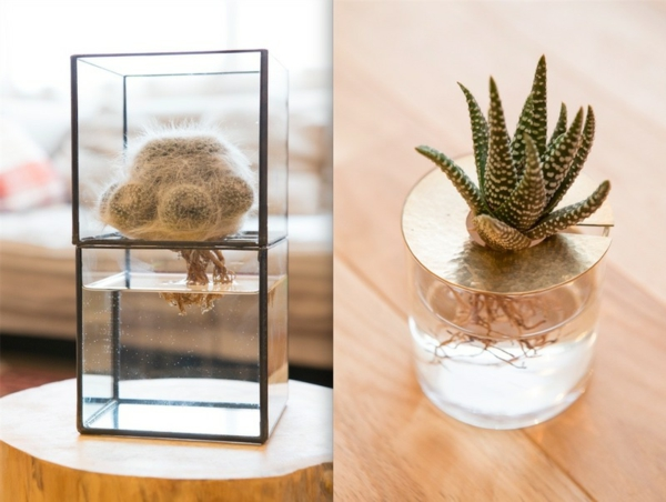 idée déco salon plante aquatique cactus