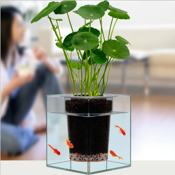 idée plante aquatique poissons