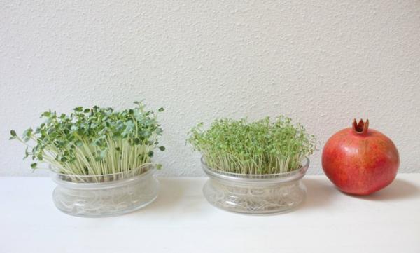 jardinage maison diy graines germées