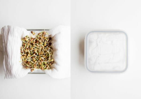 nourriture saine diy graines germées