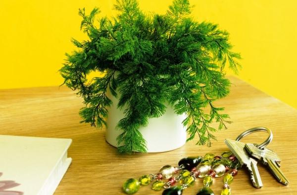 plante anti-moustique au couloir
