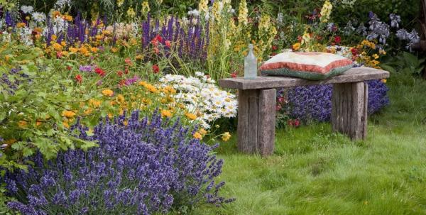 plante anti-moustique beau coin dans le jardin