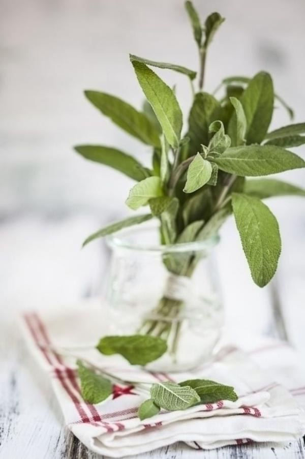 plante anti-moustique la sauge