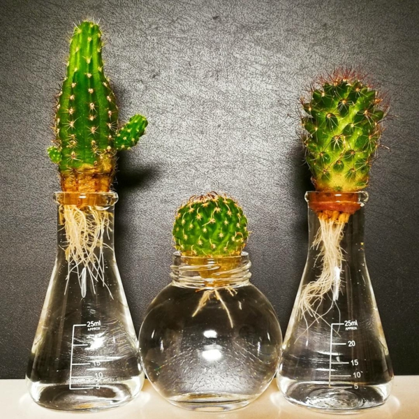 plante aquatique cactus tube à essai