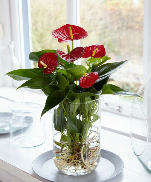 plante aquatique en vase anthurium