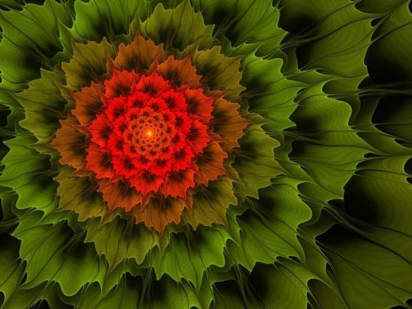 plante exotique beau mahaon