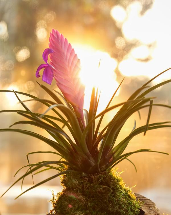 plante exotique beauté exotique