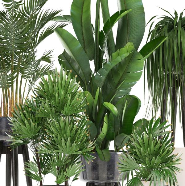 plante exotique différentes dimensions des feuilles