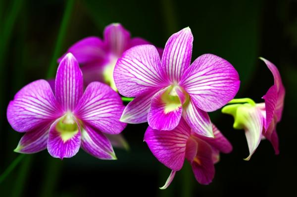 plante exotique pétales et langue