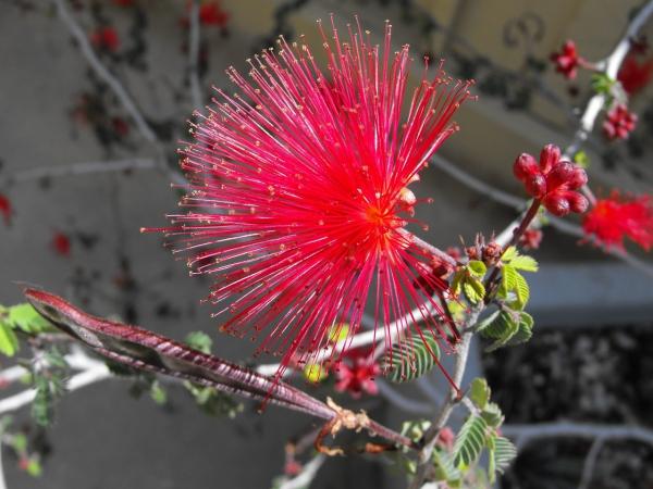 plante exotique plante rustique
