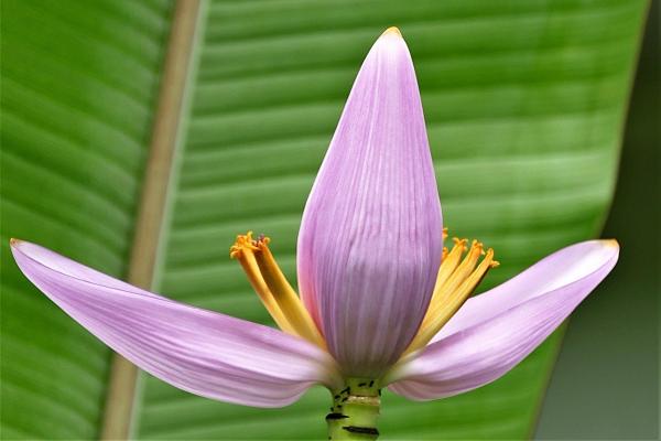 plante exotique ressemble à une torche