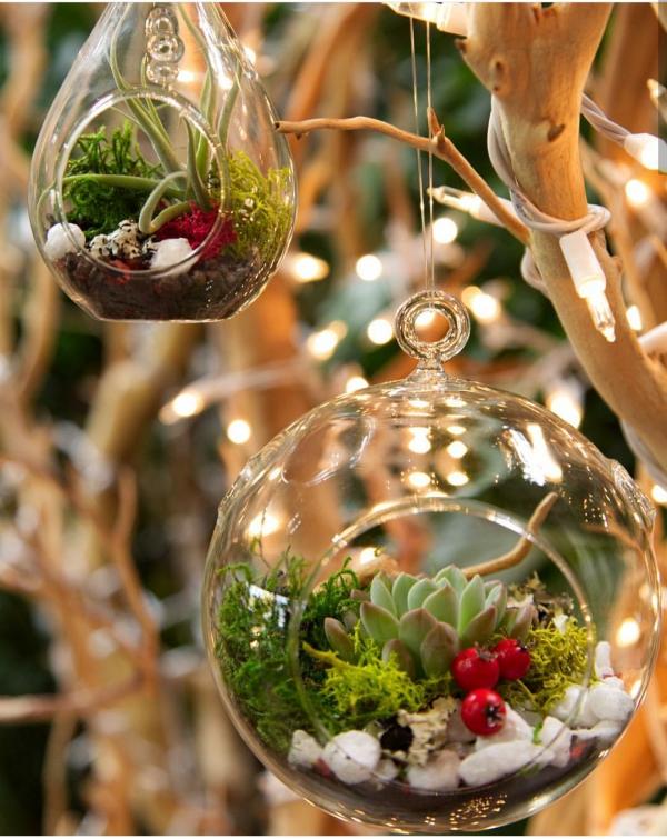 plante exotique un petit terrarium