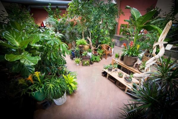 plante exotique une boutique de plantes exotiques