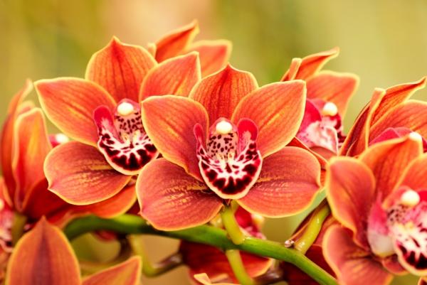 plante exotique une orchidée orange