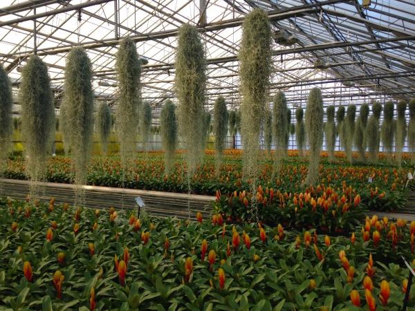 plante exotique une serre
