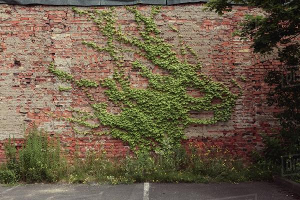 plante grimpante forme étonnante