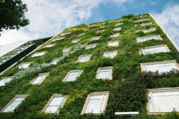 plante grimpante sur la façade
