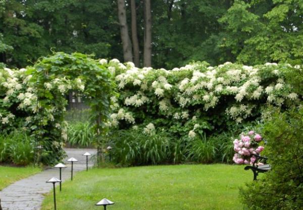 plante grimpante un coin romantique