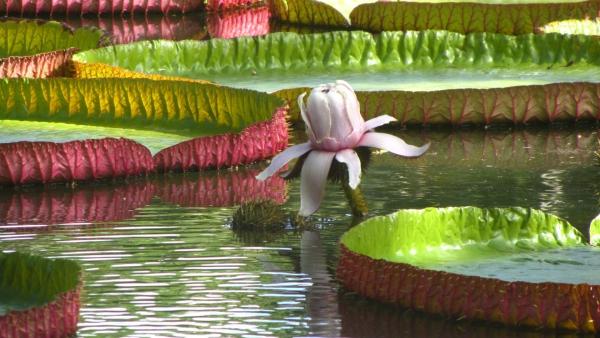 plante lacustre ambiance fantastique