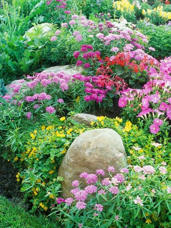 plante rocaille de gros rochers