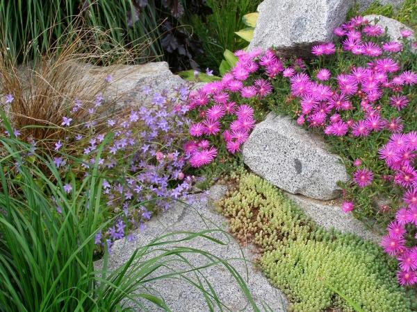 plante rocaille des roches en granit