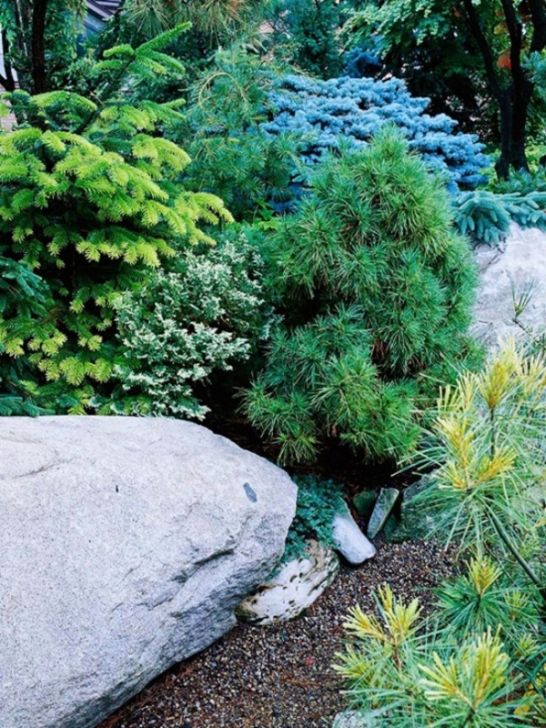 plante rocaille du vert en nuances