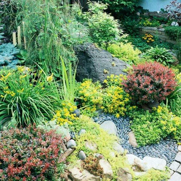 plante rocaille figure en galets