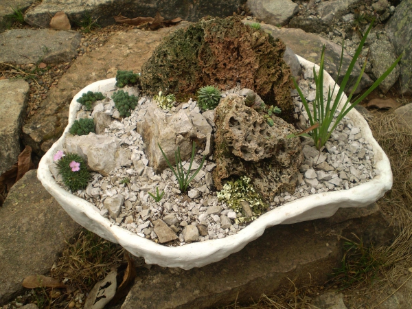 plante rocaille joli bassin calcaire
