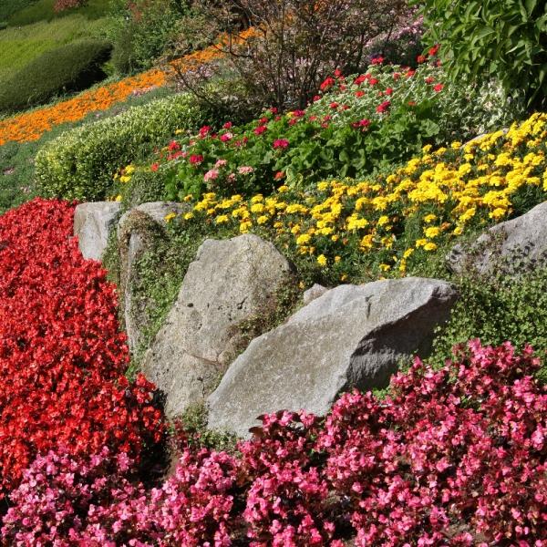 plante rocaille mélange de fleurs