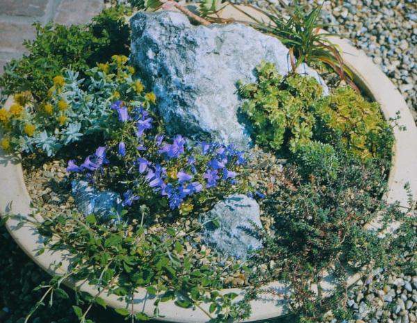plante rocaille plantes différentes