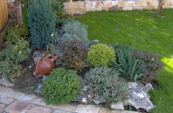 plante rocaille plantes vertes