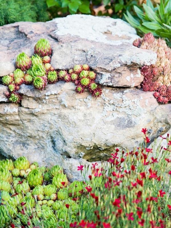 plante rocaille plantes vivaces