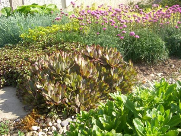 plante rocaille plusieurs succulents