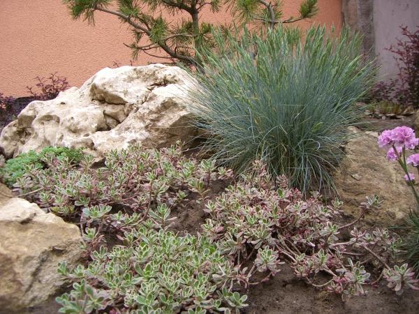 plante rocaille roches calcaires