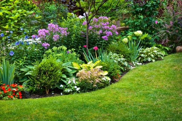 plante vivace arbustes vivaces