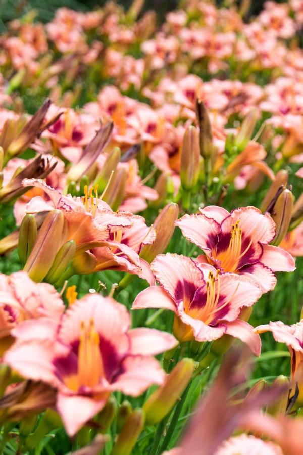 plante vivace la fleur parfaite