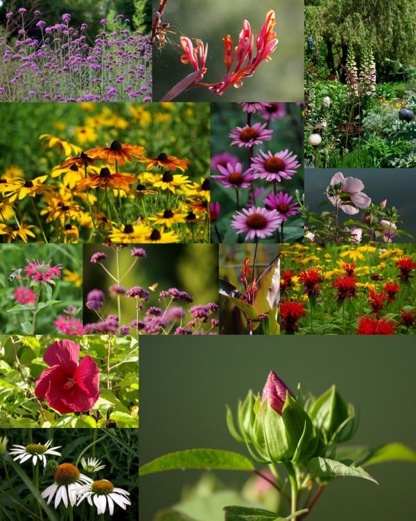 plante vivace sauvages et belles