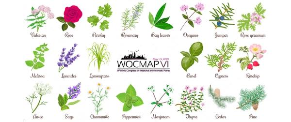 plantes aromatiques grande richesse