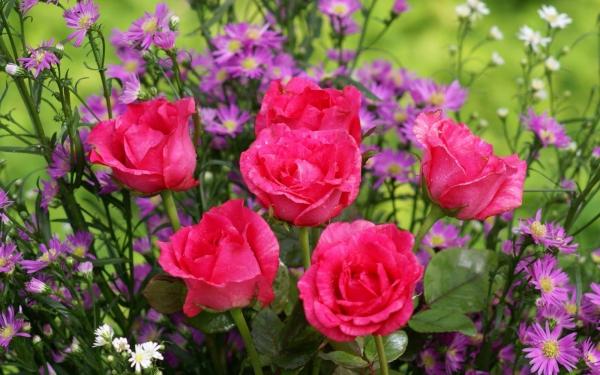 plantes aromatiques la reine des fleurs