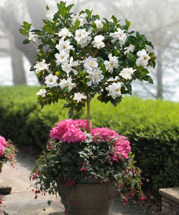 plantes aromatiques petit arbuste