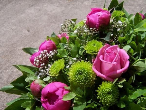 plantes aromatiques un riche bouquet