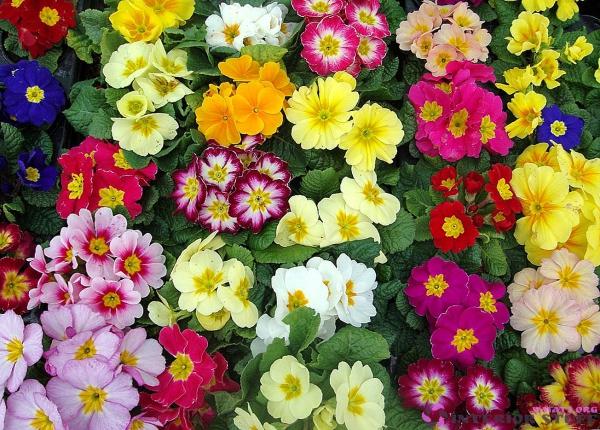 plantes aromatiques un tapis multicolore