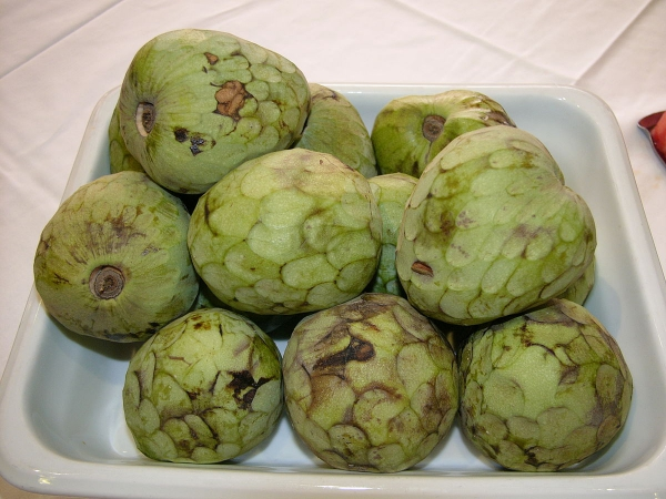 cherimoya fruits mûrs